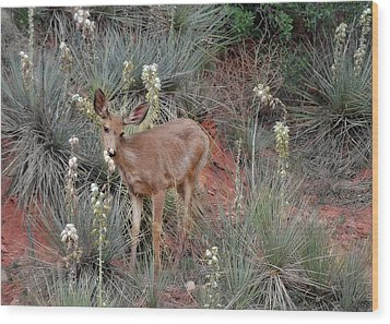 'wild' Times At Garden Of The Gods Colorado Wood Print by Christine Till