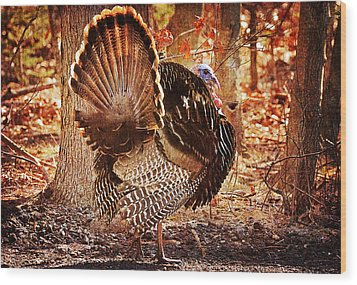 Wood Print featuring the photograph Wild Turkey by Angel Cher