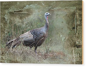 Wood Print featuring the photograph Wild Turkey by Jan Piller