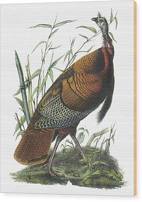 Wild Turkey Wood Print by John James Audubon