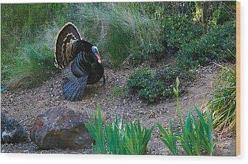 Wild Turkey Wood Print