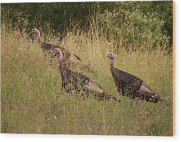 Wild Turkeys Wood Print by Michael Peychich