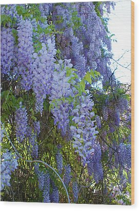 Wild Visteria In Nc Wood Print by Jeanette Oberholtzer