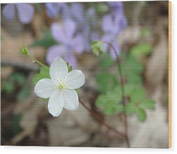 Wild Woodland Phlox Wood Print by Rebecca Overton