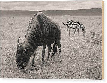 Wildebeest And Zebra Wood Print