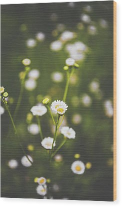 Wood Print featuring the photograph Wildflower Beauty by Shelby Young