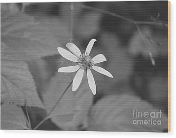 Wood Print featuring the photograph Wildflower by Eric Liller