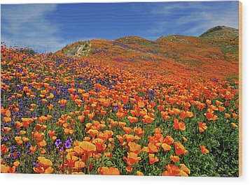 Wildflower Jackpot Wood Print