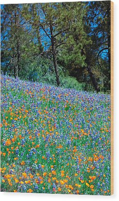 Wood Print featuring the photograph Wildflower Meadow - Figueroa Mountains California by Ram Vasudev