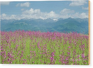 Wildflower Meadows And The Carpathian Mountains, Romania Wood Print