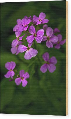 Wildflower Pallette Wood Print by Timothy McIntyre