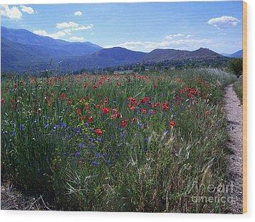 Wildflower Path Wood Print by Judy Kirouac
