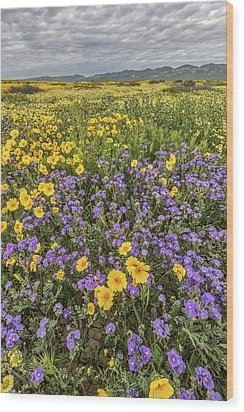 Wood Print featuring the photograph Wildflower Super Bloom by Peter Tellone