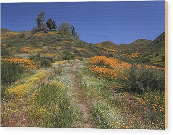 Wood Print featuring the photograph Wildflower Superbloom by Cliff Wassmann