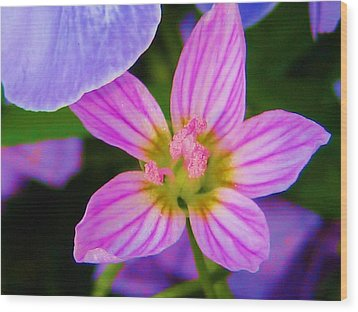 Wood Print featuring the photograph Wildflower by Susan Carella