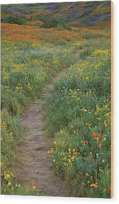 Wood Print featuring the photograph Wildflower Trail At Diamond Lake In California by Jetson Nguyen