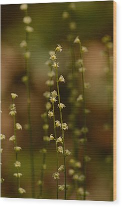 Wildflowers 1 Wood Print by Maria Suhr