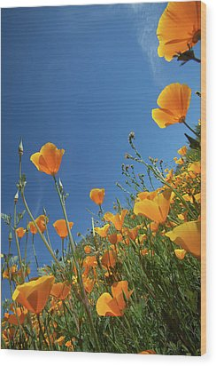 Wood Print featuring the photograph Wildflowers And Blue Sky by Cliff Wassmann