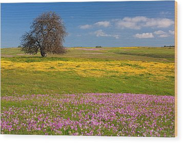 Wildflowers And Oak Tree - Spring In Central California Wood Print