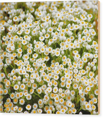 Wood Print featuring the photograph Wildflowers by Holly Kempe