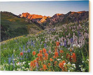Wildflowers In Albion Basin. Wood Print by Johnny Adolphson