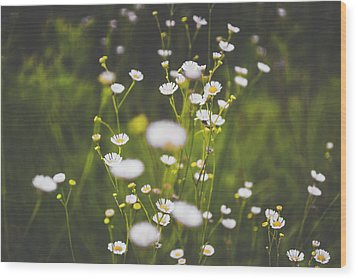 Wood Print featuring the photograph Wildflowers In Summer by Shelby Young