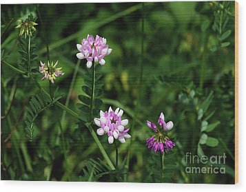 Wildflowers Northford Wood Print