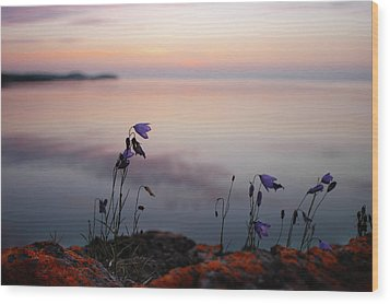 Wildflowers Over Lake Superior Wood Print