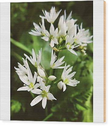 #wildgarlic #flower #woodland #walks Wood Print by Natalie Anne