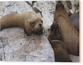 Wood Print featuring the photograph Wildlife Of The Ballestas Islands by Aidan Moran
