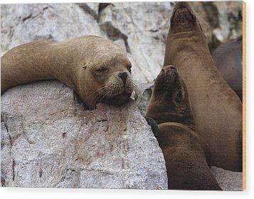 Wildlife Of The Ballestas Islands Wood Print by Aidan Moran