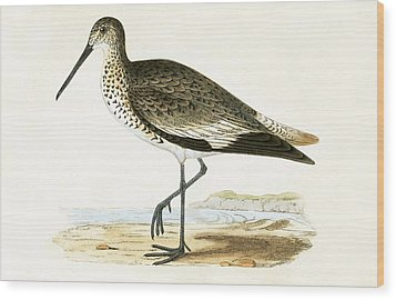 Willet Wood Print by English School
