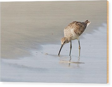 Wood Print featuring the photograph Willet On Beach by Bob Decker