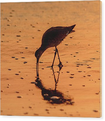 Wood Print featuring the photograph Willet On Sunrise Surf by Steven Sparks