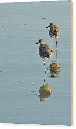 Willets On Jekyll Wood Print by Bruce Gourley