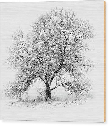 Willow And Blizzard Wood Print by Altus Photo Design