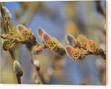 Willow Buds Wood Print