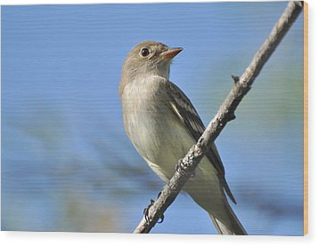 Willow Flycatcher 3 Wood Print by Gerald Hiam