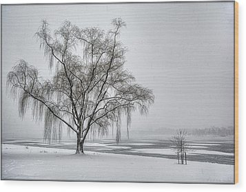 Willow In Blizzard Wood Print