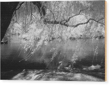 Willow Tree Lake II Wood Print