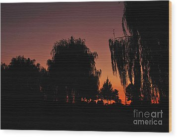 Willow Tree Silhouettes Wood Print by Joe  Ng