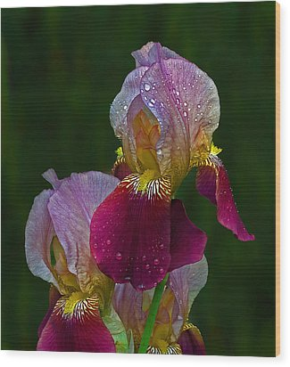 Willowwood Iris Wood Print by Robert Pilkington