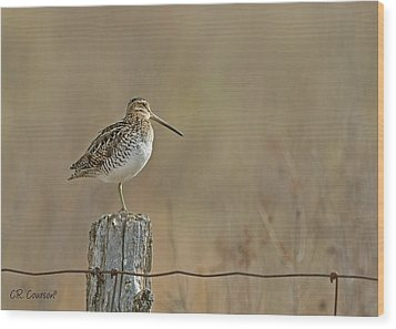 Wilson's Snipe On A Post Wood Print by CR Courson