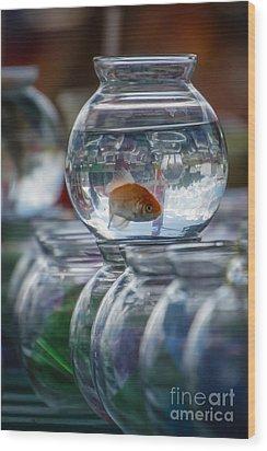 Win A Goldfish Wood Print