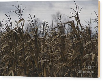 Wind Blown Wood Print by Linda Shafer