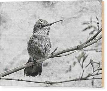 Wood Print featuring the photograph Wind In Her Feathers by Angie Vogel