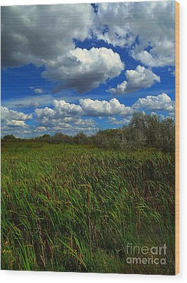 Wind In The Cattails Wood Print by Annie Gibbons