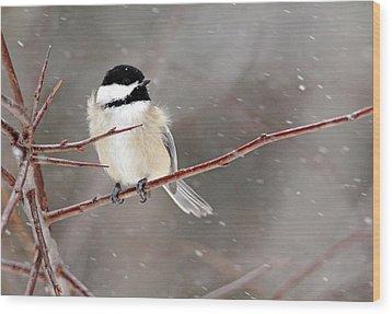 Windblown Chickadee Wood Print