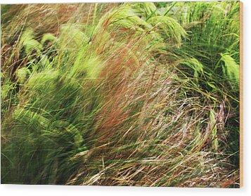 Windblown Grasses Wood Print