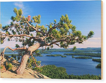 Windswept Pine On Rattlesnake Mountain Wood Print